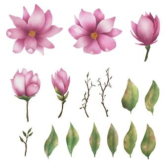 Elementos de flor rosa desenhados à mão