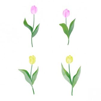 Elementos de flor tulipa vermelha e amarela estilo aquarela