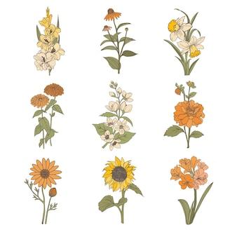 Elementos de flores de outono. desenhados à mão set.gladiolus, narciso, jasmim, zínia, ursínia.