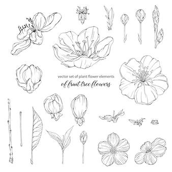 Elementos de flores de plantas de flores de árvores frutíferas