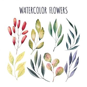 Elementos de flores em aquarela