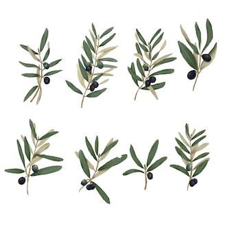 Elementos de folha de oliveira desenhados à mão