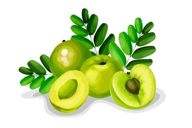 Elementos de frutas amla desenhados à mão