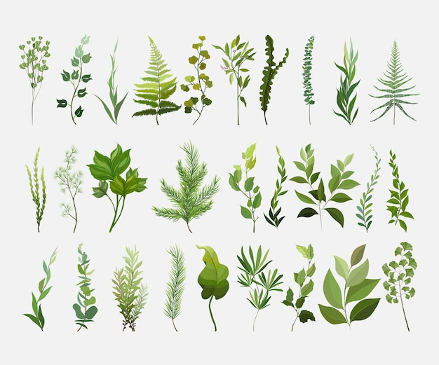Elementos do vetor designer definir coleção de samambaia verde da floresta.