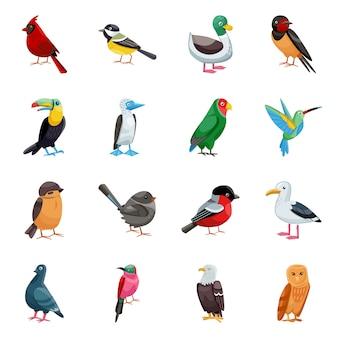 Elementos dos desenhos animados de pássaros selvagens. ilustração isolada de animal selvagem. conjunto de pássaro de elementos.