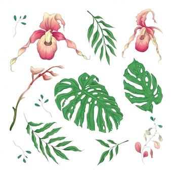 Elementos florais de flores tropicais de orquídea