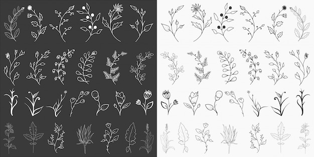 Elementos florais desenhados à mão