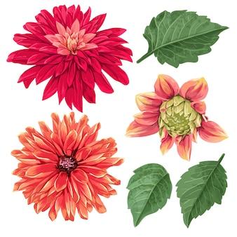 Elementos florais tropicais de flores de ásteres vermelhos