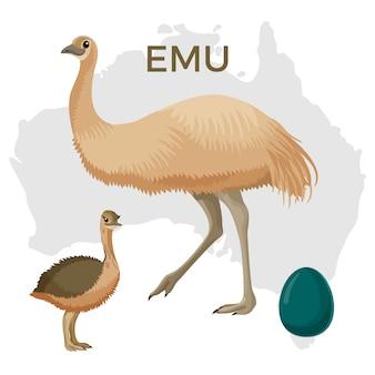 Emu pássaro