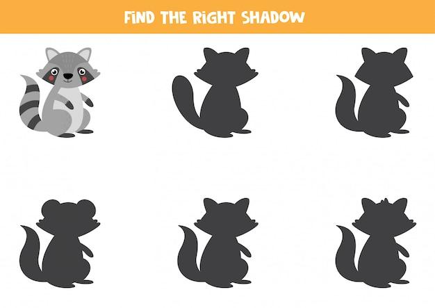 Encontre a sombra certa do guaxinim. jogo educativo para crianças.