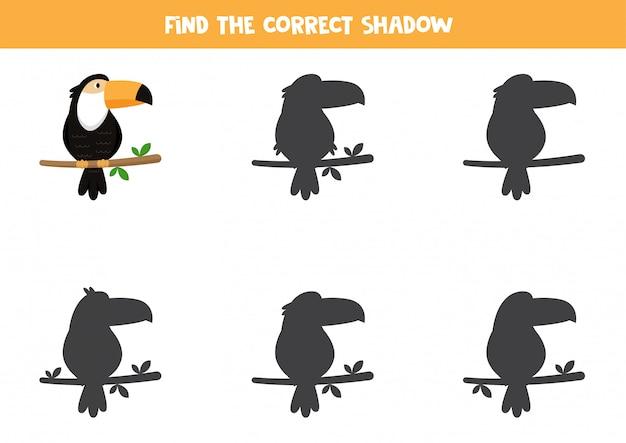 Encontre a sombra certa do tucano. planilha para impressão para crianças.