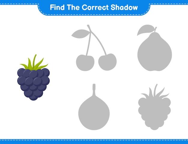 Encontre a sombra correta. encontre e combine a sombra correta de blackberries. jogo educativo para crianças, planilha para impressão