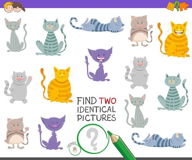 Encontre dois gatos idênticos