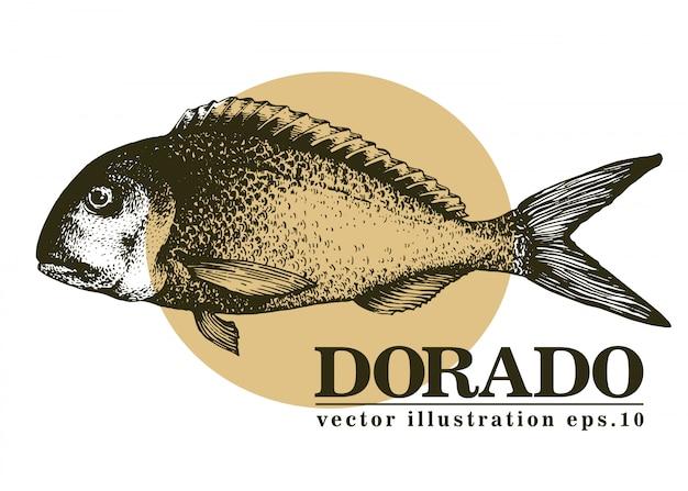 Entregue a ilustração desenhada do vetor de peixes do dorado.