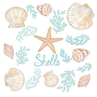 Entregue ilustrações tiradas do vetor - coleção das conchas do mar.