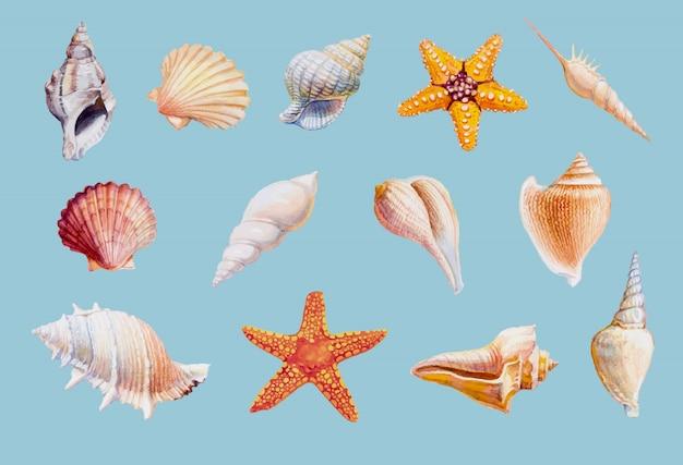 Entregue o marisco e a estrela do mar tirados no fundo branco, ilustração do vetor.