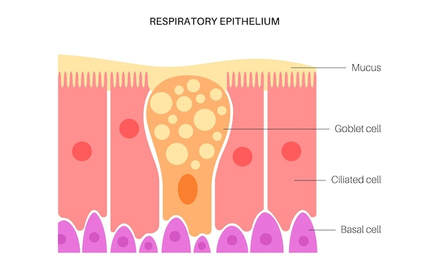 Epitélio nasal