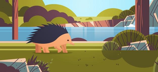 Equidna andando na floresta australiano animal selvagem animais selvagens fauna conceito paisagem horizontal