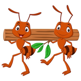 Equipe de formigas carregando um tronco