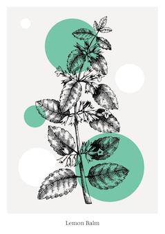 Erva-cidreira desenhada à mão com ilustração de flores e folhas