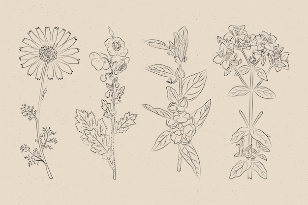 Ervas botânicas e flores silvestres em estilo vintage