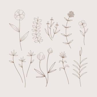 Ervas botânicas minimalistas e flores silvestres