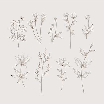 Ervas botânicas simplistas e flores silvestres em estilo vintage