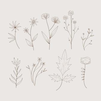 Ervas botânicas simplistas e flores silvestres