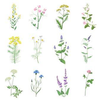 Ervas de folhagem selvagem, conjunto de folhas de flores isoladas