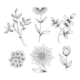 Ervas desenhadas à mão realista e flores silvestres