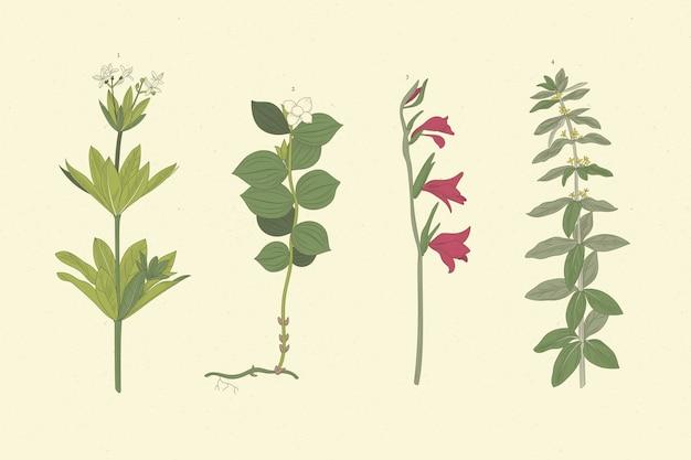 Ervas desenhadas à mão realistas e flores silvestres