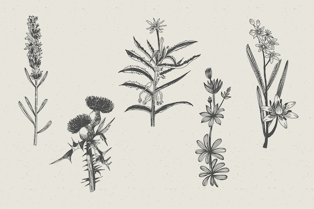 Ervas desenhadas realistas e flores silvestres