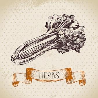 Ervas e especiarias de cozinha. fundo vintage com esboço desenhado à mão aipo