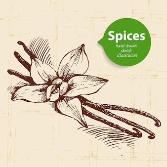 Ervas e especiarias de cozinha. fundo vintage com esboço desenhado à mão baunilha