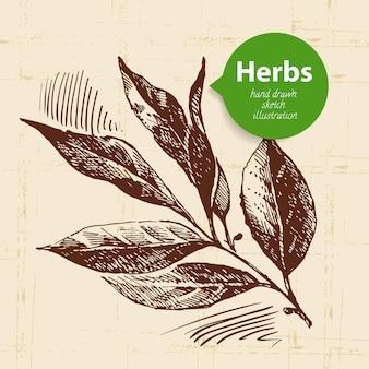 Ervas e especiarias de cozinha. fundo vintage com folha de louro de esboço desenhado à mão