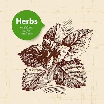 Ervas e especiarias de cozinha. fundo vintage com menta de esboço desenhado à mão