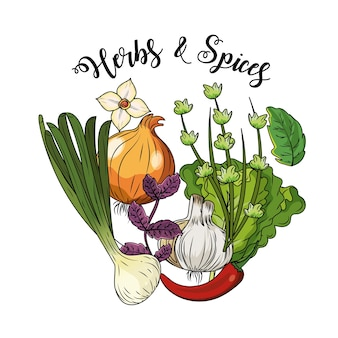 Ervas e especiarias plantas e alimentos para órgãos