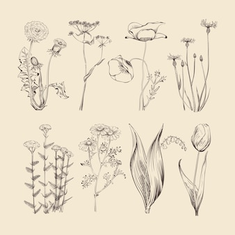 Ervas e flores de flores silvestres