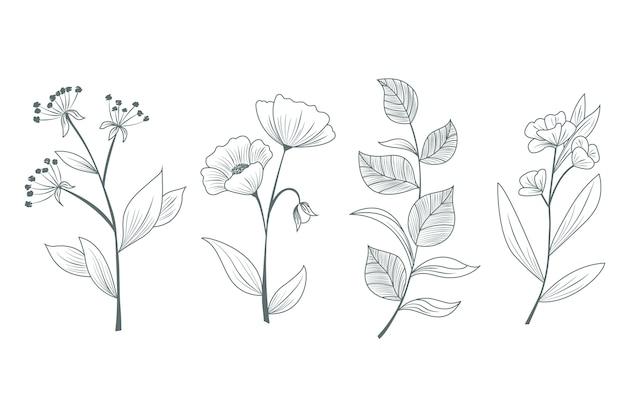 Ervas e flores silvestres desenhadas à mão para estudos