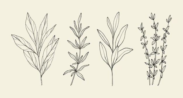 Ervas e plantas culinárias desenhadas à mão