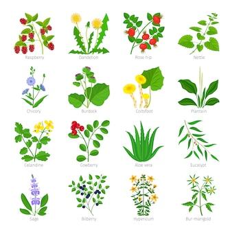 Ervas medicinais de aromaterapia