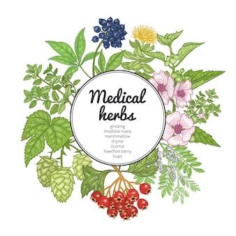 Ervas medicinais, plantas e lugar para inscrição. gravura vintage. desenho da mão no fundo branco. cartão colorido. ilustração para textos, capas e cartazes de medicina alternativa. Vetor Premium