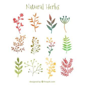 Ervas naturais no estilo da aguarela