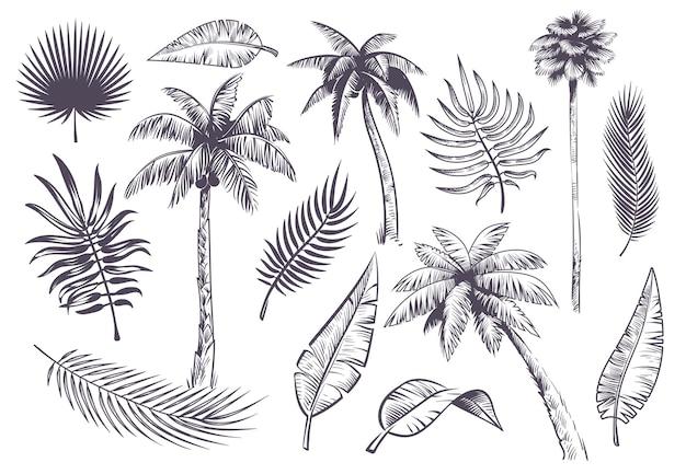 Esboçar palmeiras e folhas, palmeiras e folhas tropicais desenhadas à mão, silhueta negra de plantas exóticas