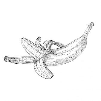 Esboce a banana aberta. banana desenhada de mão. ilustração gravada a tinta