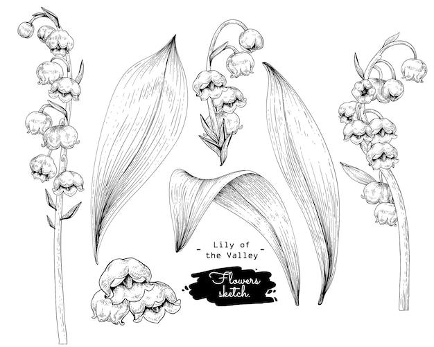 Esboce a coleção floral botany, desenhos de flores em lírio do vale.