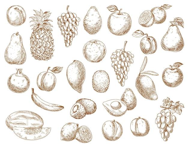 Esboce frutas ícones isolados de romã