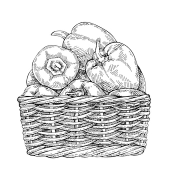 Esboce pimentas frescas na cesta de vime. mão desenhada pimentão doce.