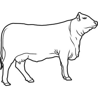 Esboço à mão desenhado à mão vetor de vaca santa gertrudis