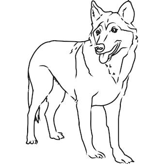 Esboço à mão - vetor de lobo desenhado à mão